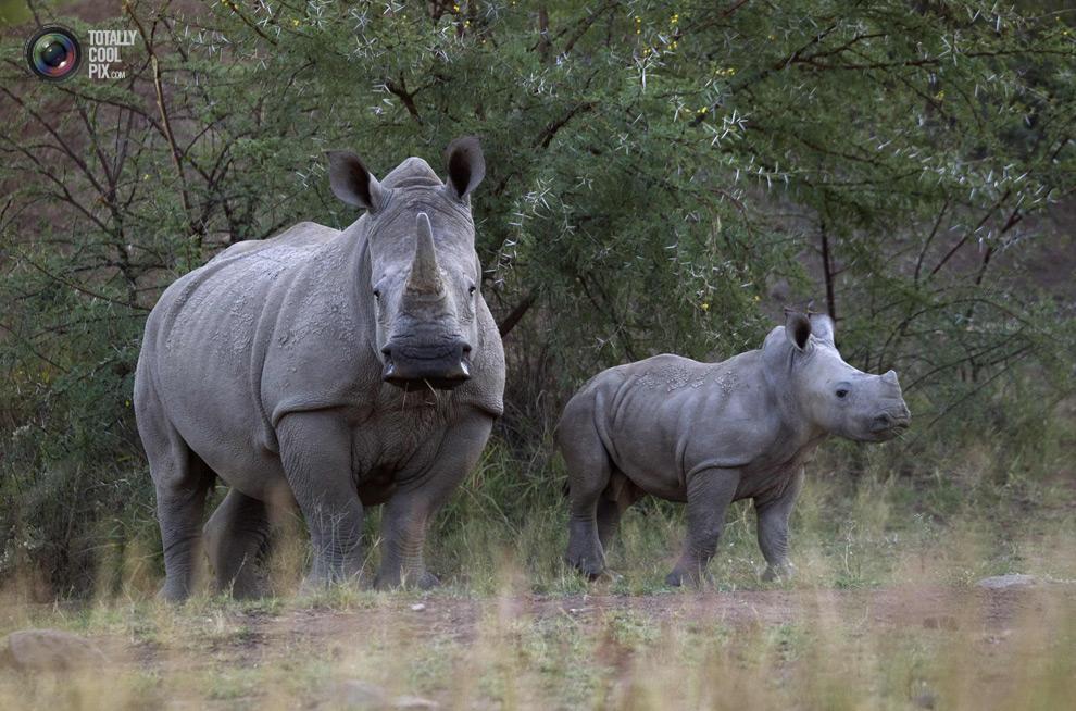 poaching 004 Браконьерство в Африке
