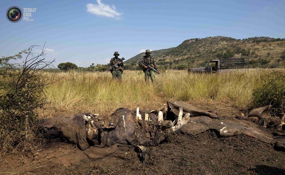 poaching 005 Браконьерство в Африке