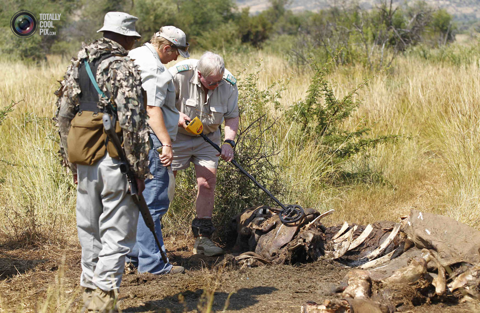 poaching 006 Браконьерство в Африке