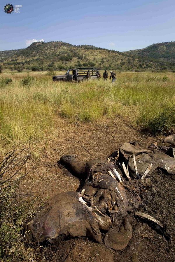 poaching 013 Браконьерство в Африке