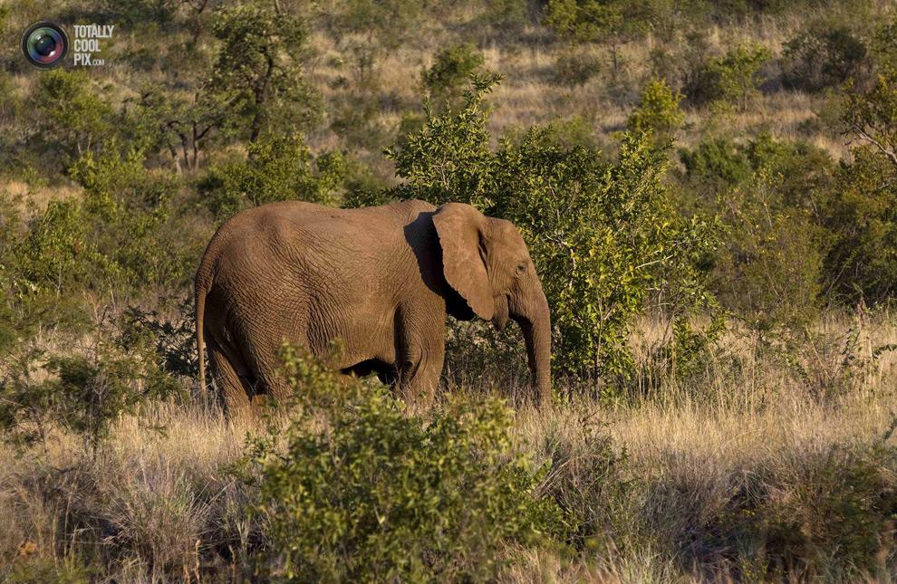 poaching 014 Браконьерство в Африке