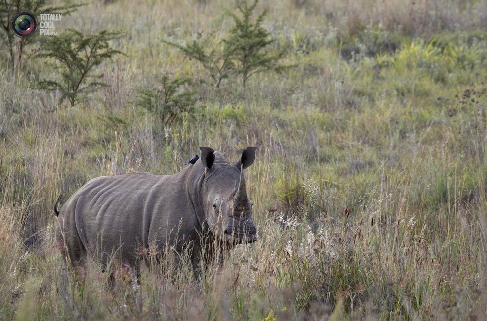 poaching 015 Браконьерство в Африке