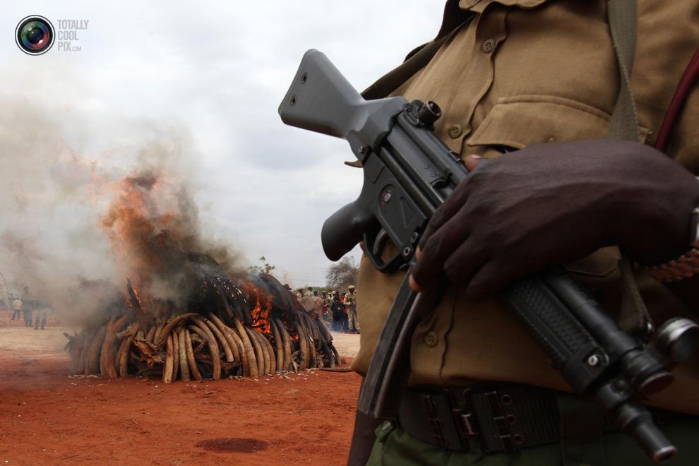 poaching 016 Браконьерство в Африке