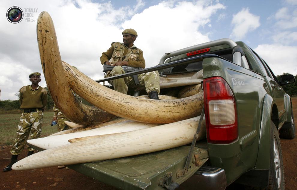 poaching 020 Браконьерство в Африке