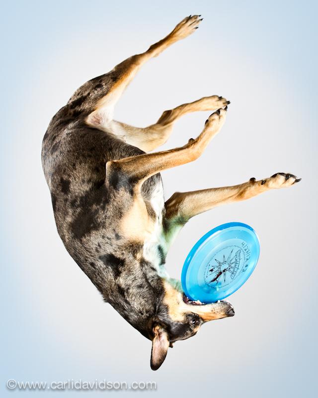 prigausc Прыгающие собаки в новом проекте Карли Дэвидсон Аппорт!