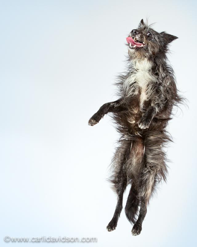 prigausd Прыгающие собаки в новом проекте Карли Дэвидсон Аппорт!
