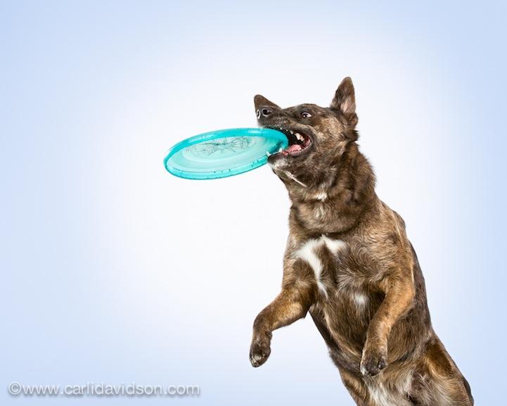 prigaush Прыгающие собаки в новом проекте Карли Дэвидсон Аппорт!