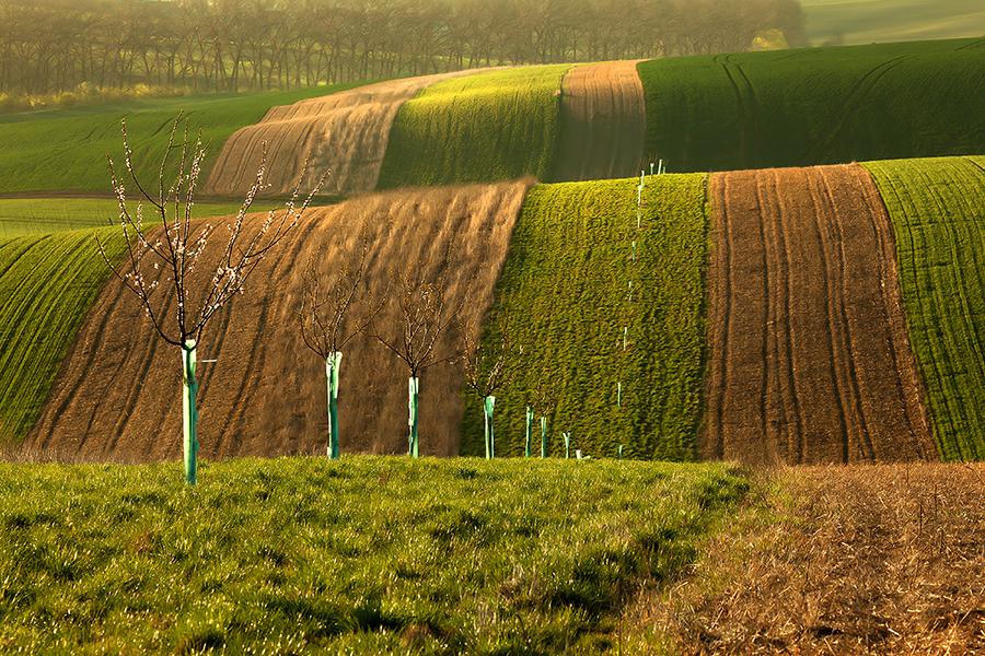 wave01 Зеленое цунами   холмистые поля Моравии