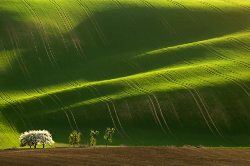 Зеленое цунами — холмистые поля Моравии