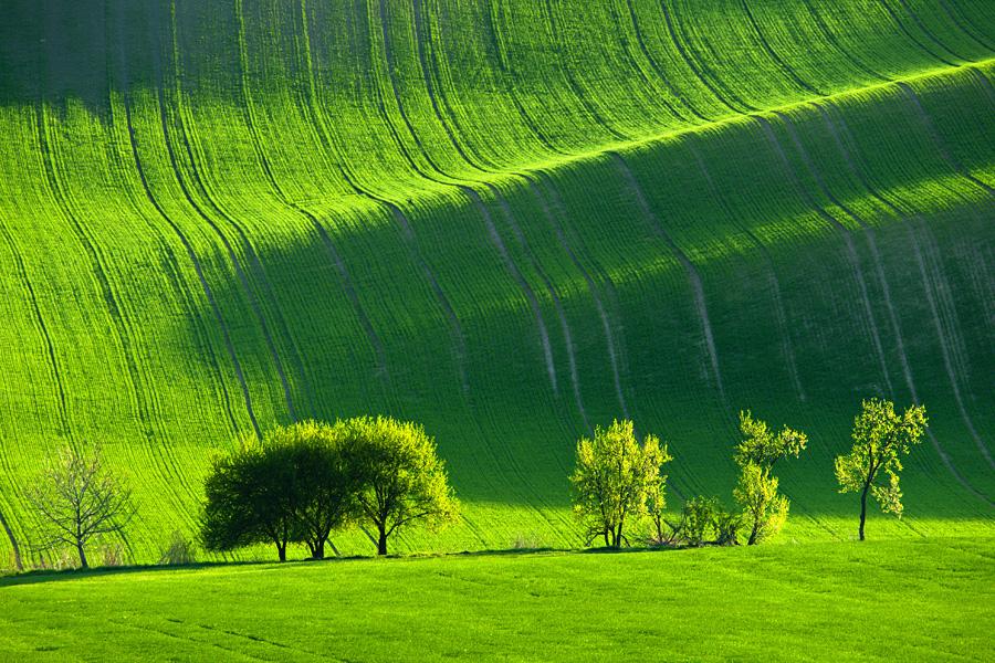 wave08 Зеленое цунами   холмистые поля Моравии
