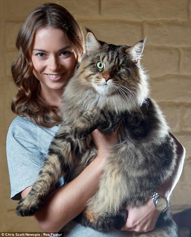 0014 645x800 Руперт   самый крупный кот в мире