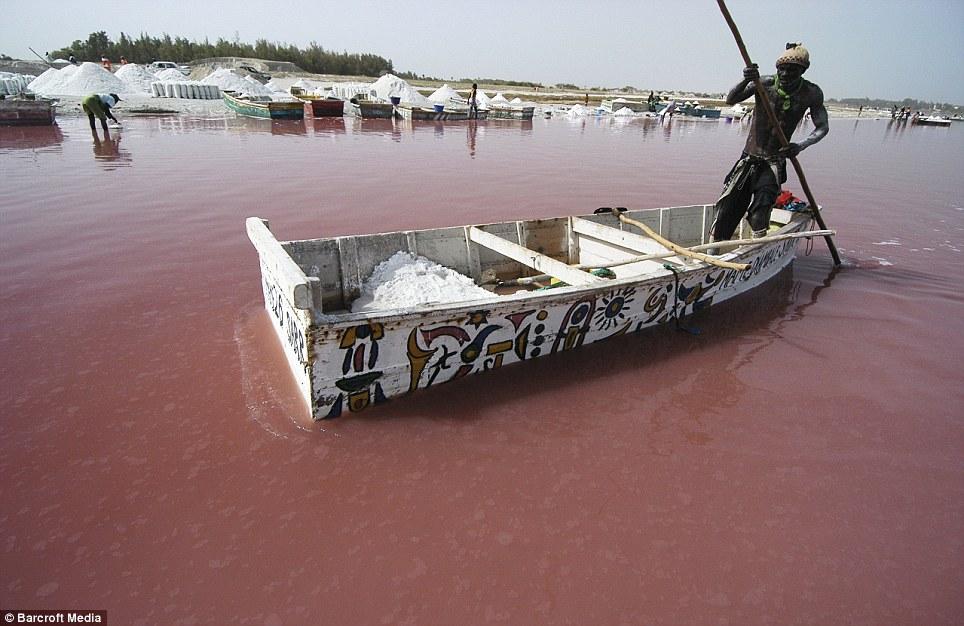 0 875c3  Розовое озеро в Сенегале