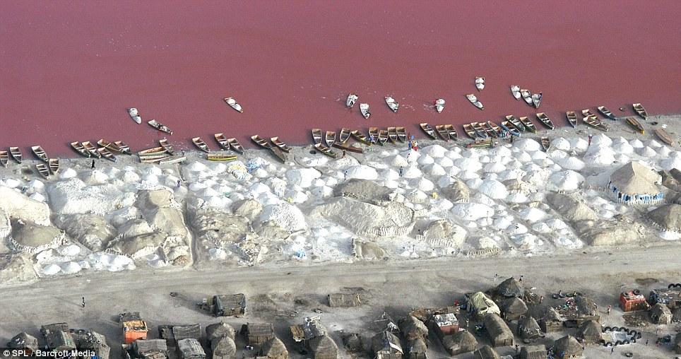 0 875c5  Розовое озеро в Сенегале