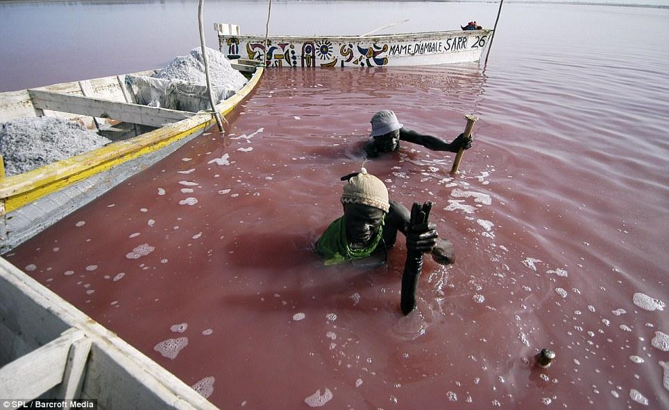 0 875c6  Розовое озеро в Сенегале