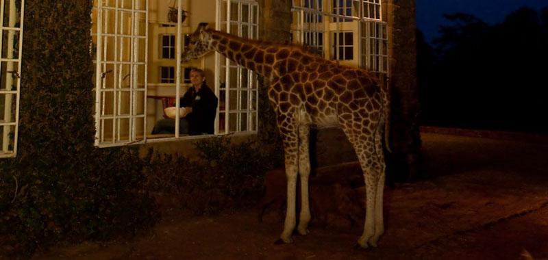 """1011 Уникальный отель """"Поместье жирафа"""""""