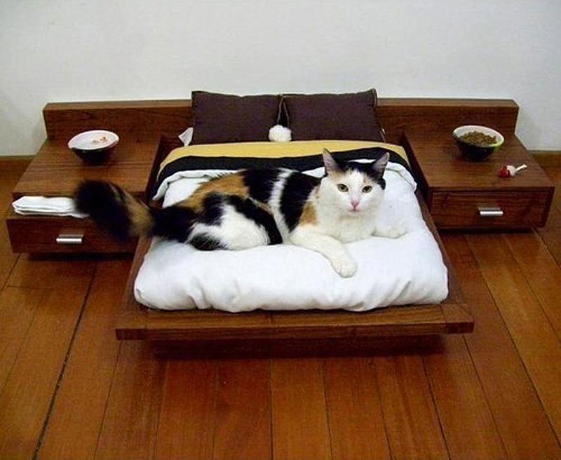 10116 Дизайн для котов