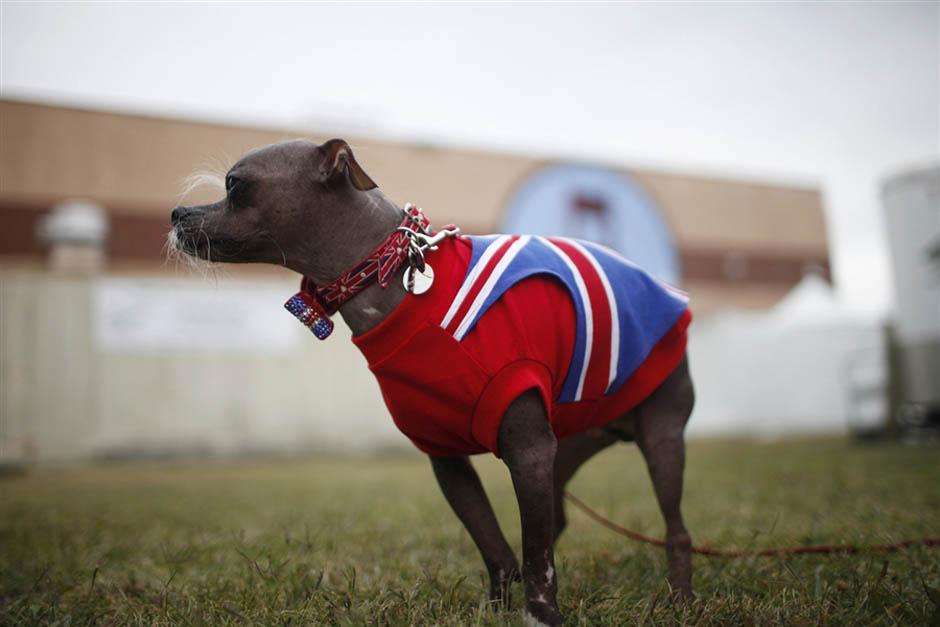 10122 Конкурс на самую уродливую собаку 2012
