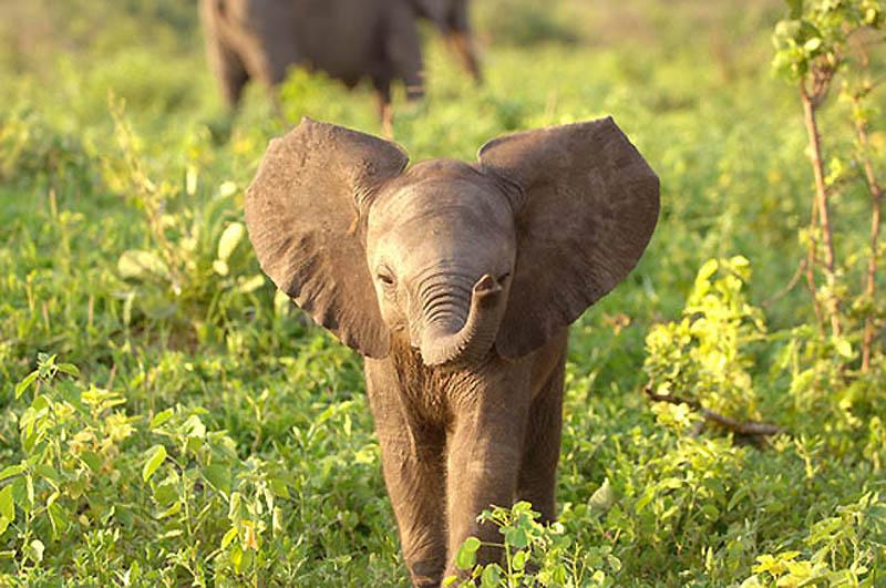 106 Такие милые слонята