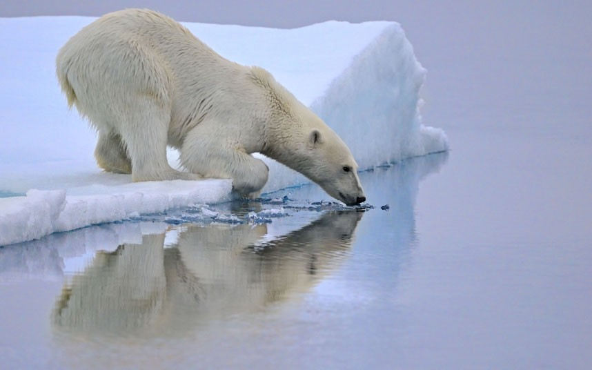 1083 Фотографии дикой природы Энди Роуса