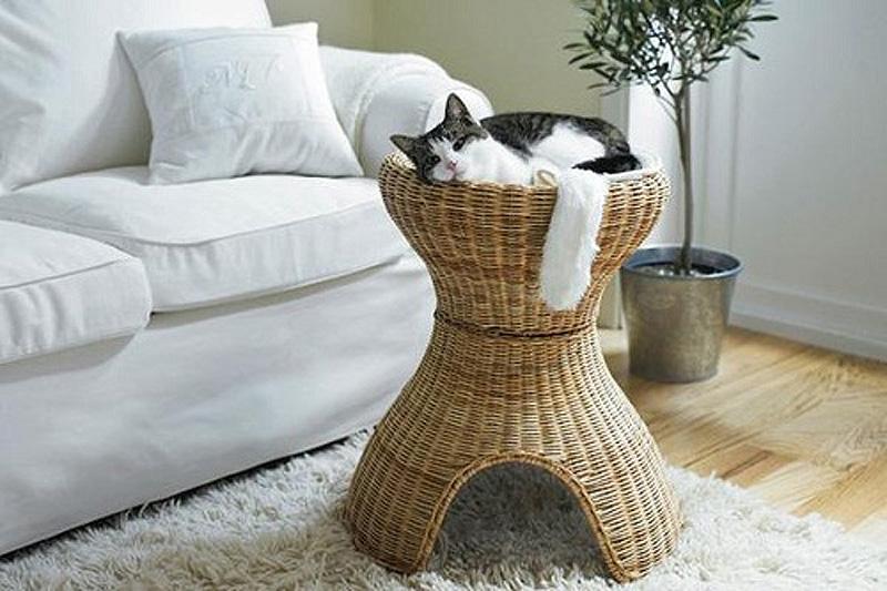 11146 Дизайн для котов