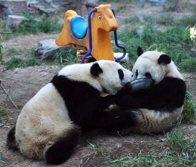 Милые забавные панды
