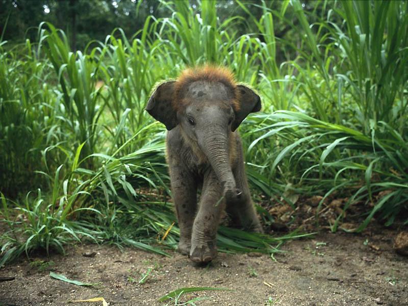 120 Такие милые слонята
