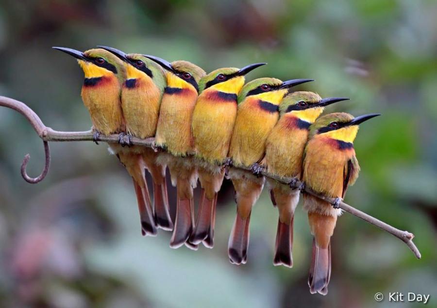 12109 Фотоконкурс World Bird 2012