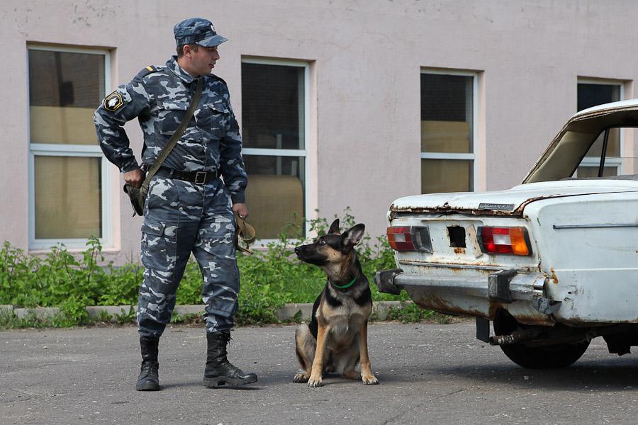 12114 21 июня ежегодно отмечается День кинологических подразделений Министерства внутренних дел Российской Федерации