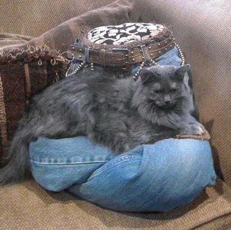 12117 Дизайн для котов