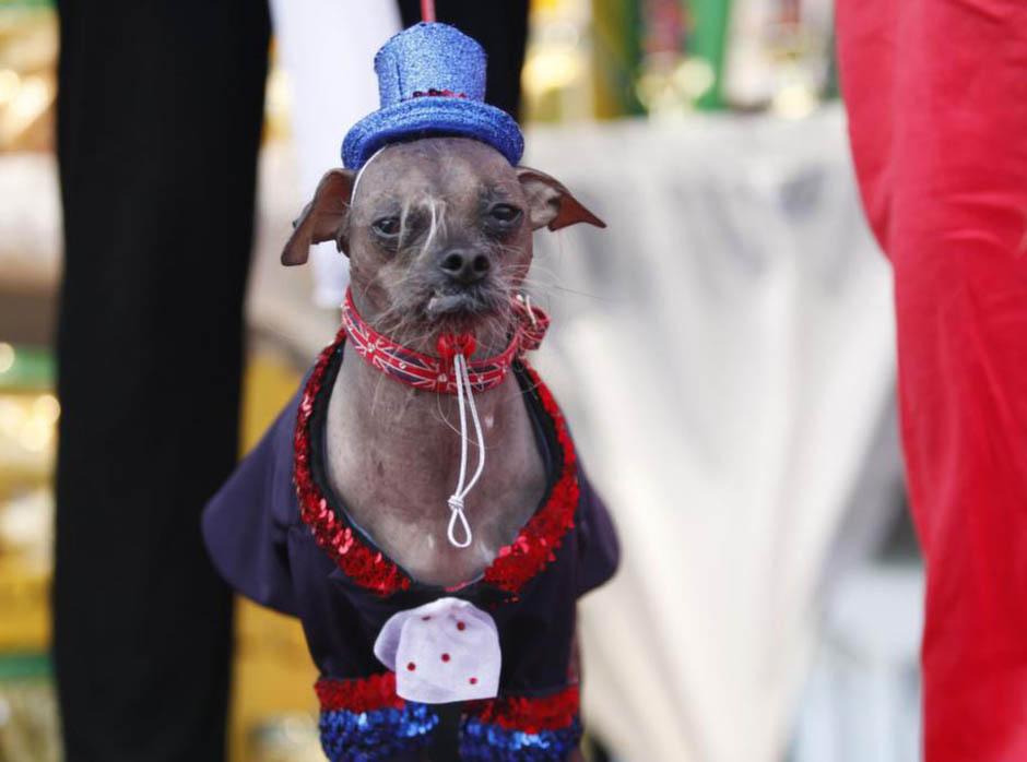 12123 Конкурс на самую уродливую собаку 2012