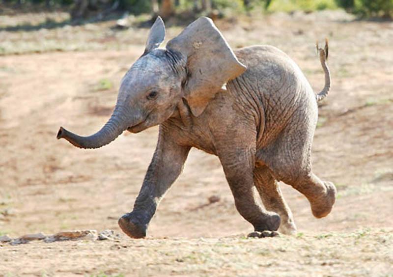 125 Такие милые слонята