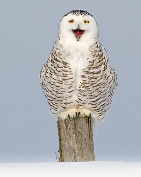 1284 Фотографии дикой природы Энди Роуса