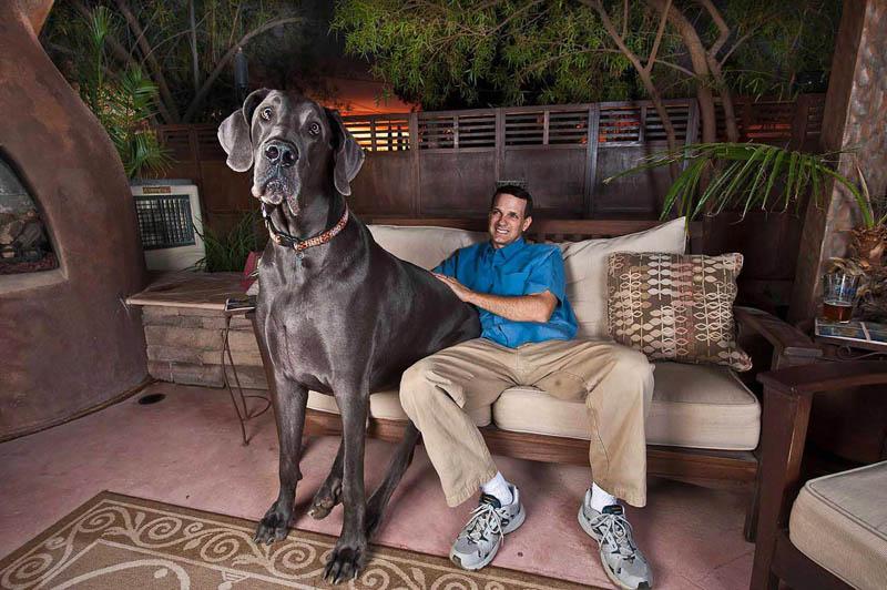 1297 Собака великан