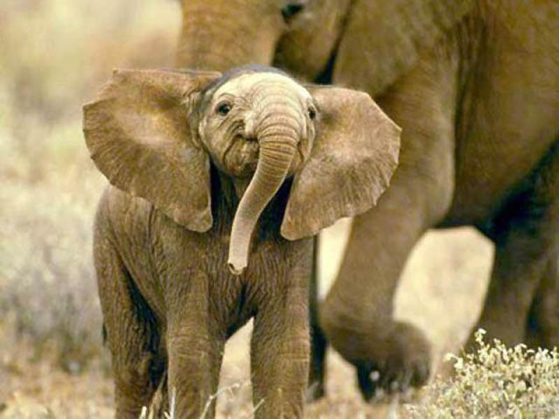 135 Такие милые слонята