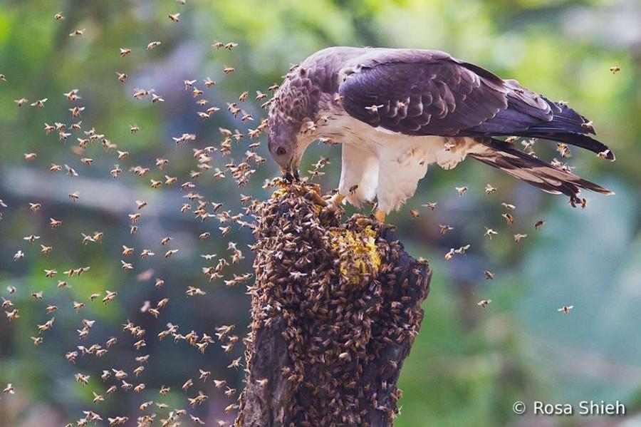 1392 Фотоконкурс World Bird 2012