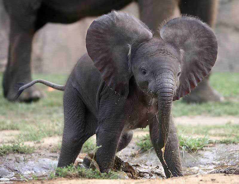 144 Такие милые слонята