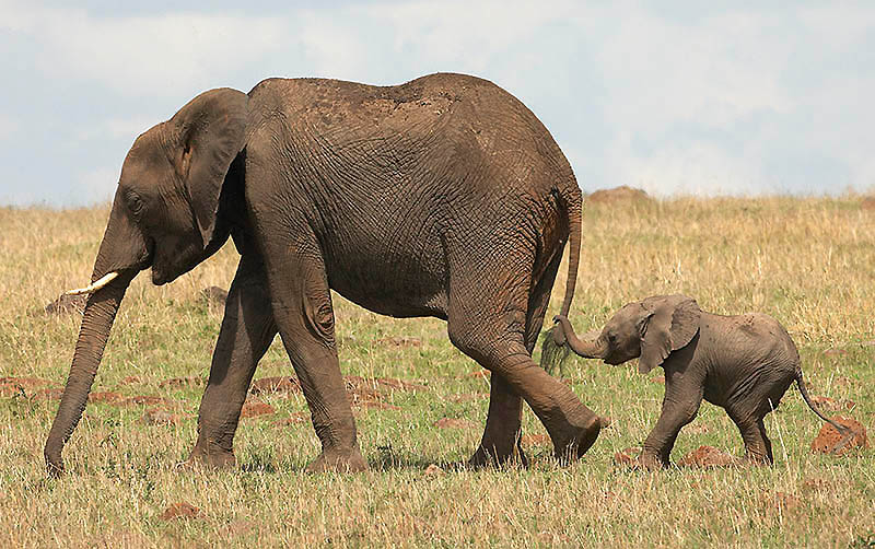 154 Такие милые слонята