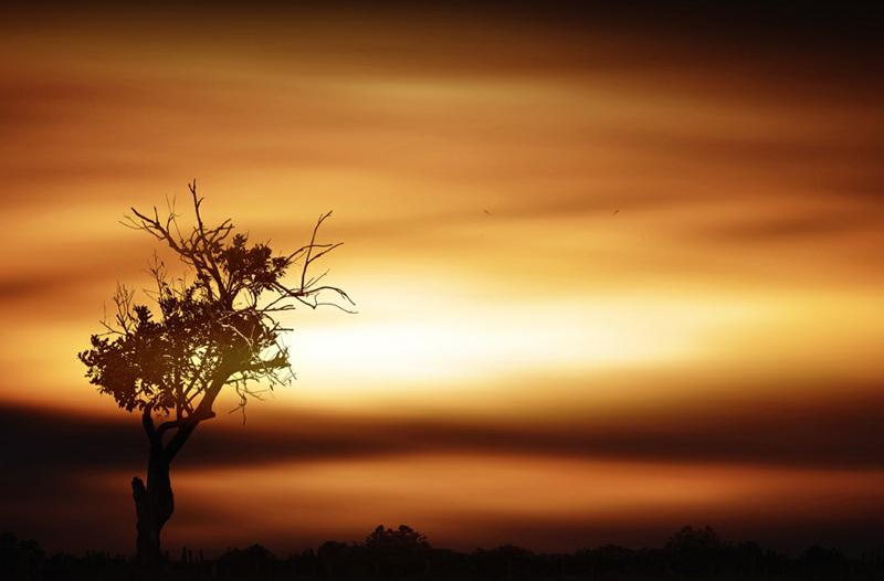 156 Солнечные силуэты в фотографиях Ирвинга Лубиса