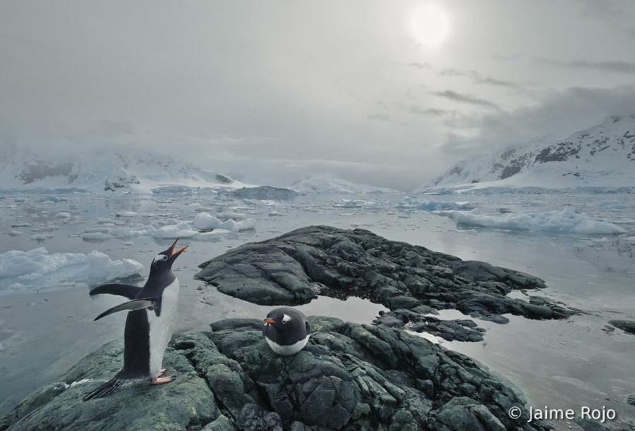 1575 Фотоконкурс World Bird 2012