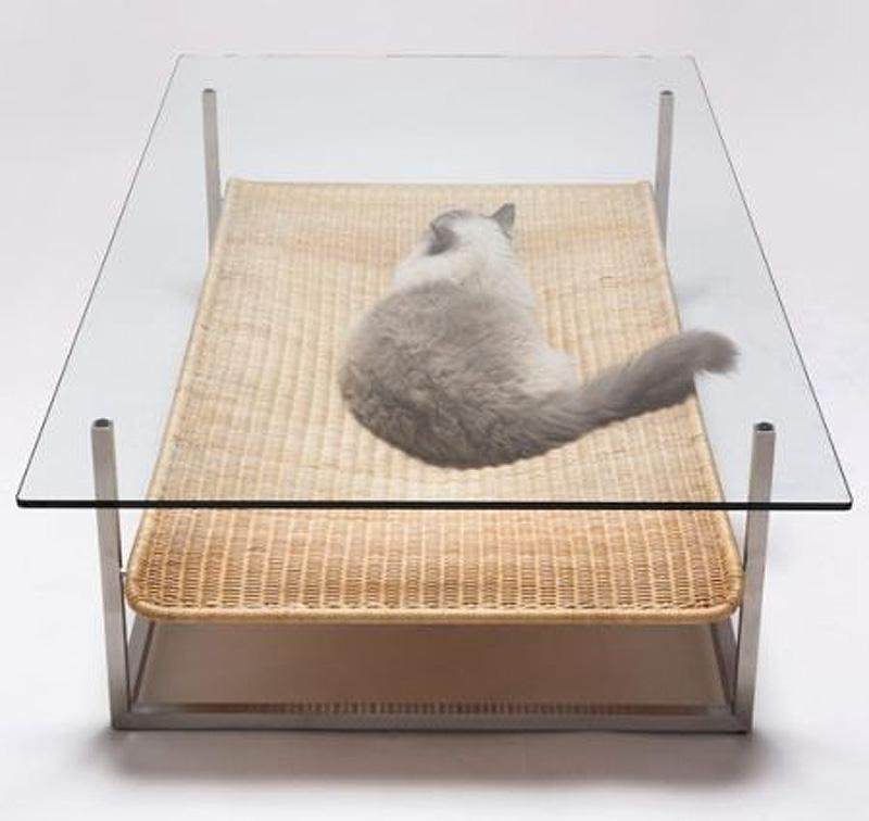 1581 Дизайн для котов