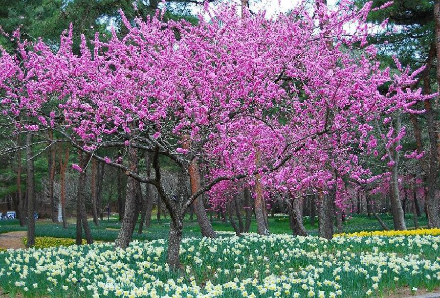 1827 Рассветная страна цветов «Hitachi Seaside Park»