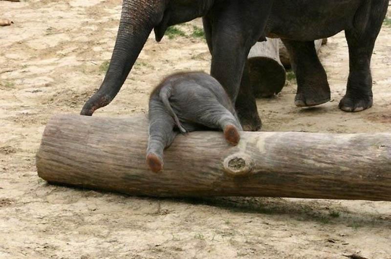 183 Такие милые слонята