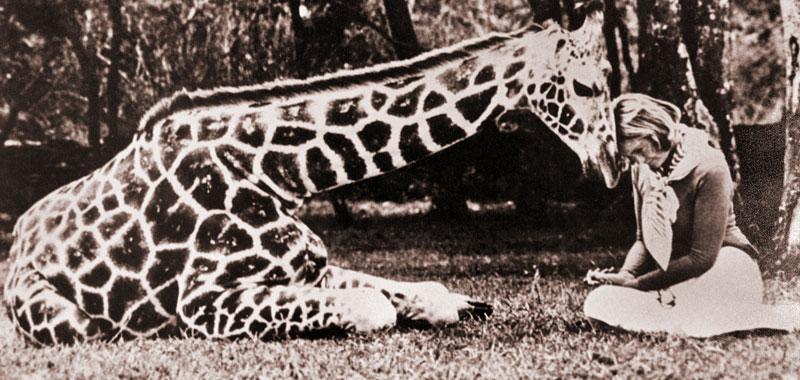 """187 Уникальный отель """"Поместье жирафа"""""""