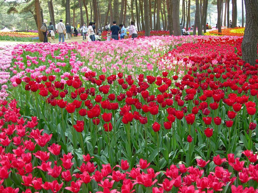 1925 Рассветная страна цветов «Hitachi Seaside Park»