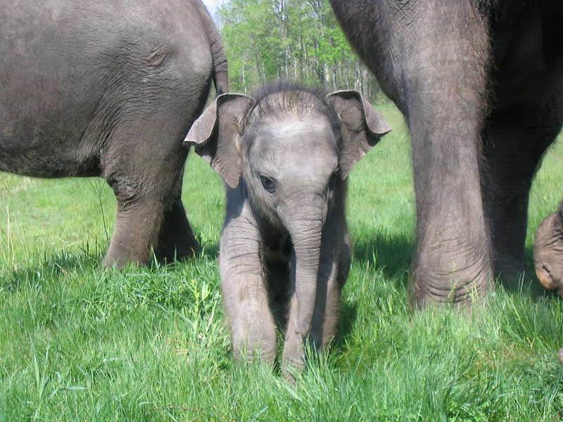 193 Такие милые слонята