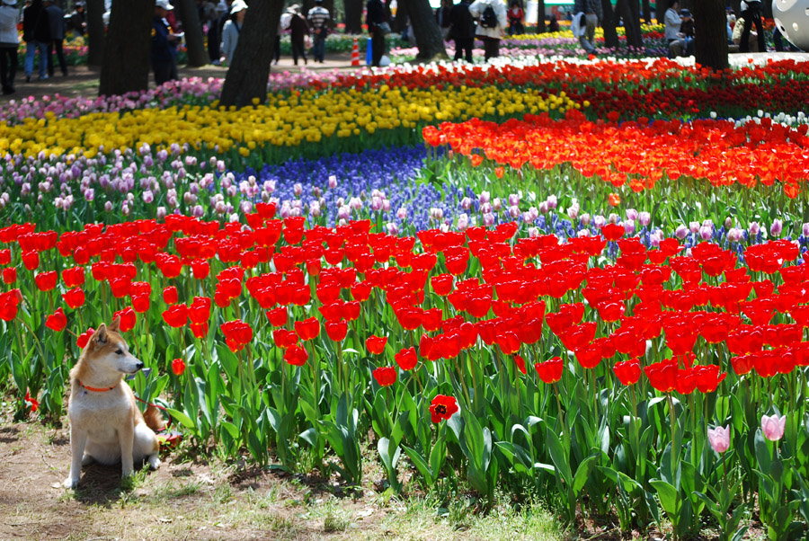 2024 Рассветная страна цветов «Hitachi Seaside Park»
