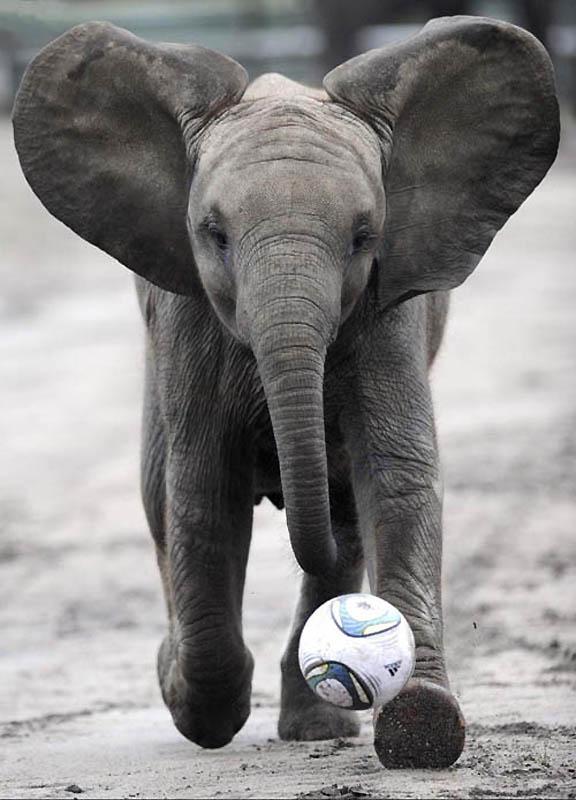 203 Такие милые слонята