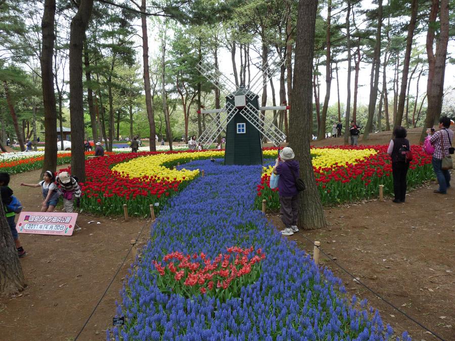 2130 Рассветная страна цветов «Hitachi Seaside Park»