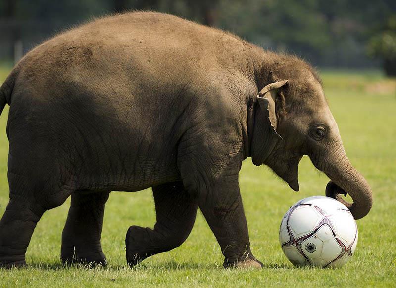 216 Такие милые слонята