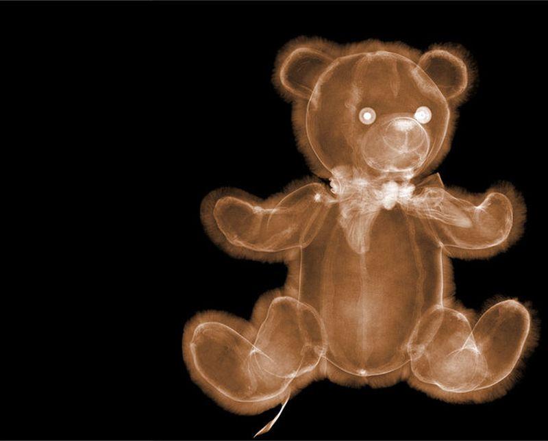 22Плюшевый медвежонок Рентгеновский взгляд на мир Ника Визи